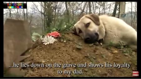 飼い主のお墓に寄り添う犬