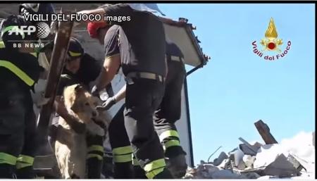 イタリア地震犬救出