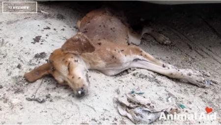 animal eid16-09-13-001