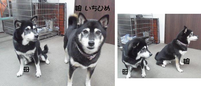 manaichi2.jpg