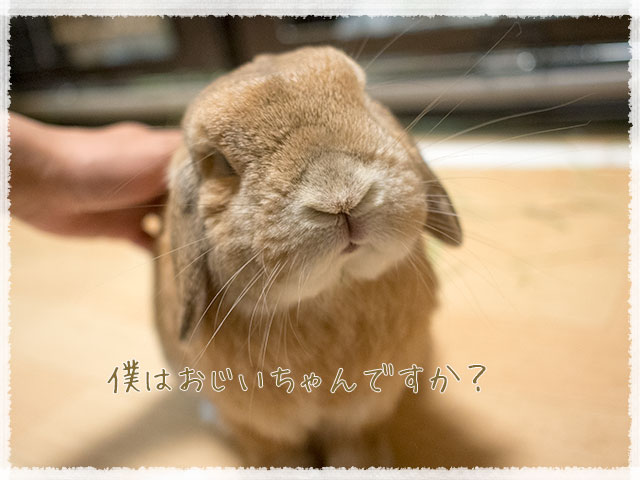 cookieblo1605183.jpg