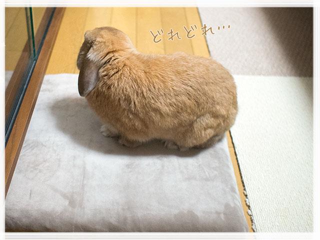 cookieblo1608096.jpg