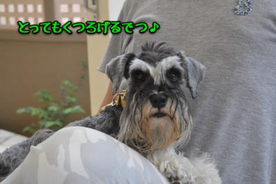 9-DSC_0077.jpg