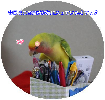 20160523100910a9f.png