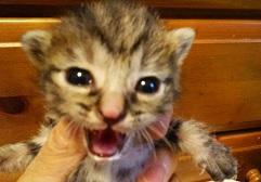 フレコン猫 DSC_0025