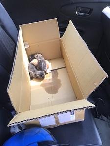 フレコン猫 IMG_1160
