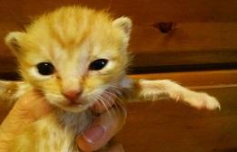 フレコン猫 DSC_0022