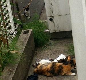野良猫なんて CM160606-151140001
