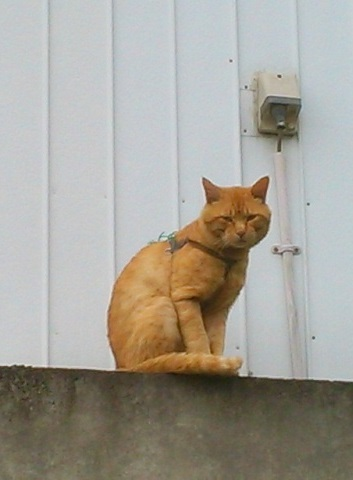 ハーネス猫 KIMG0171