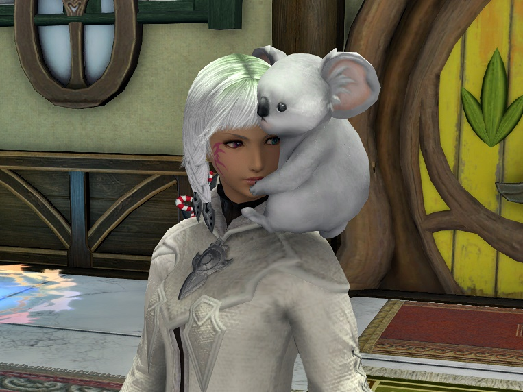 甘えん坊のコアラ