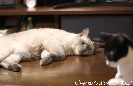 iyashi257.jpg
