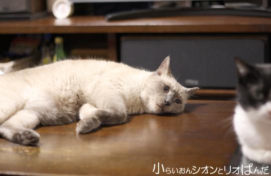 iyashi259.jpg