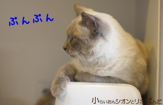 kawaii244.jpg