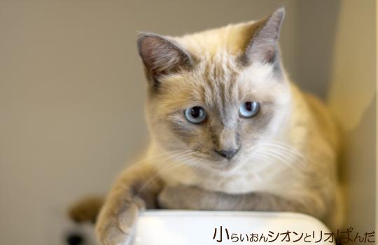 kawaii245.jpg