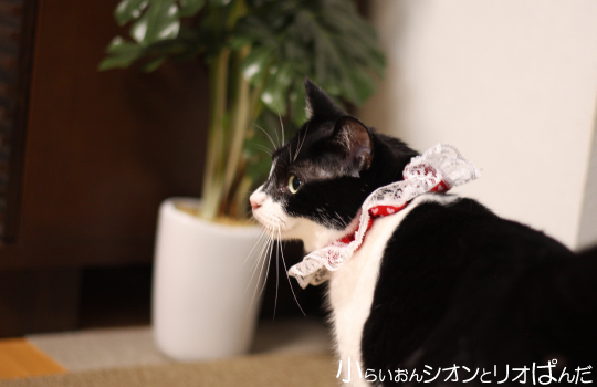 kawaii246.jpg