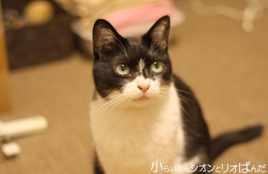 kawaii259.jpg