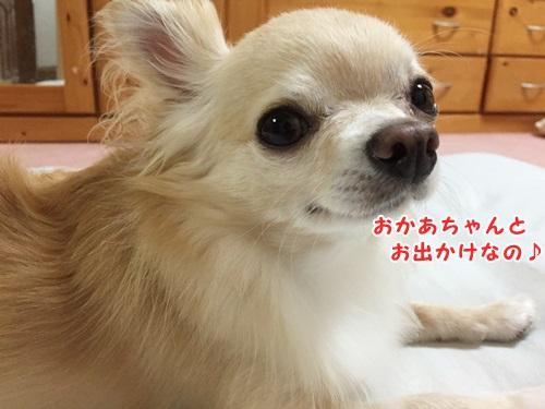 IMG_4449.jpg