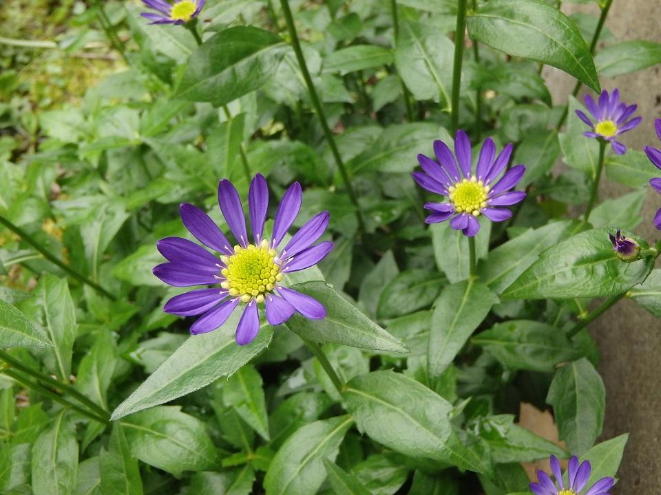 裏庭の花10001