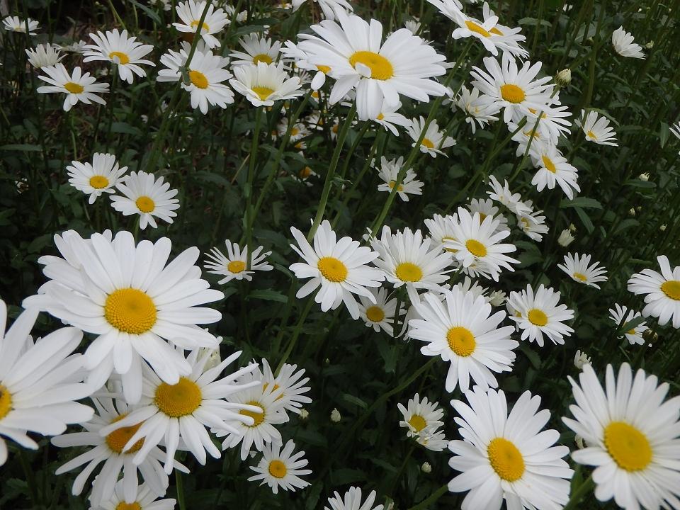 裏庭の花20002