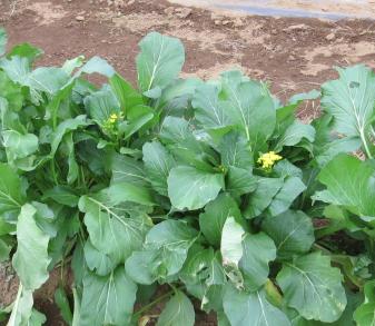 オータムポエム菜園