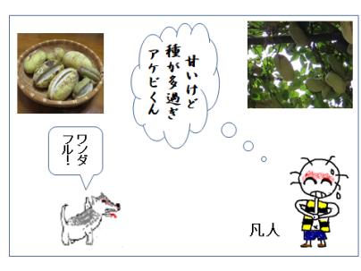 アケビ俳句絵手紙