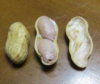 落花生の茹で豆の中身