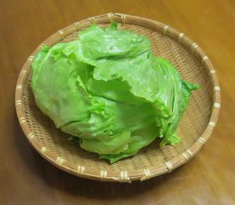 収穫物玉レタス