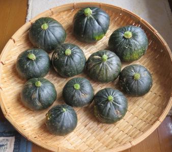 かぼちゃ収穫物
