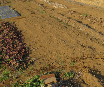生ゴミ処理後の整地の様子