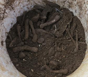 魚や骨の生ゴミ処理投入後土と混ぜる