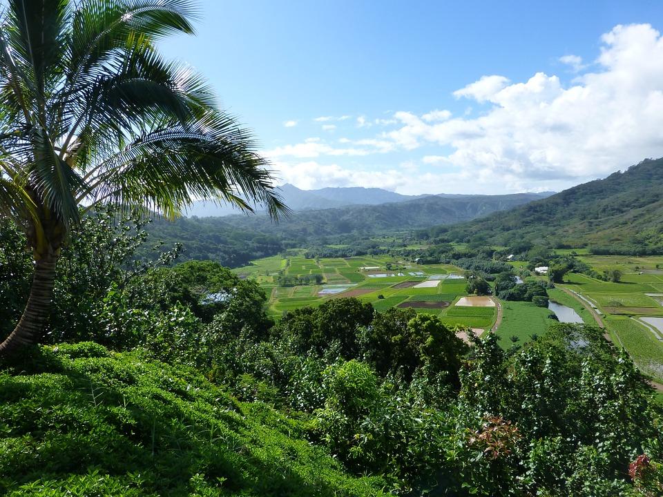 ハワイの田舎