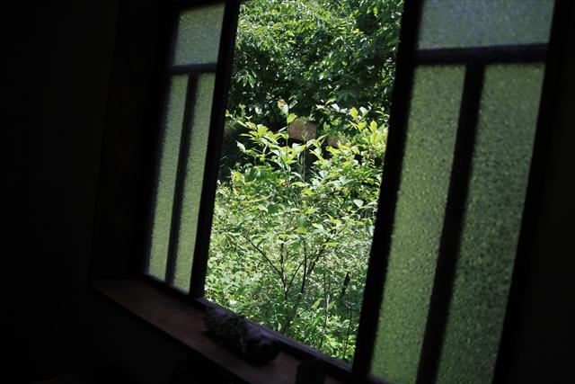 0618_nasu015.jpg
