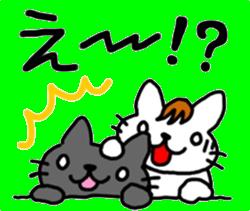 伊藤ネコ11