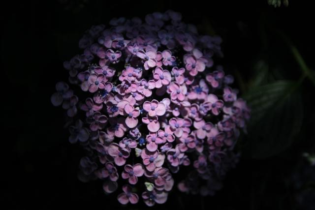 0623_鎌倉017