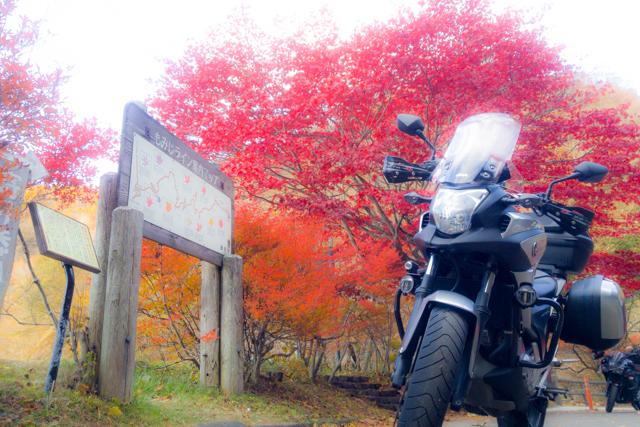 紅葉Day2 (1)