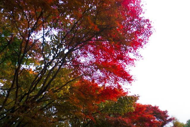 紅葉Day2 (17)