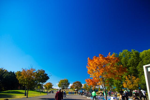 昭和記念公園 (13)