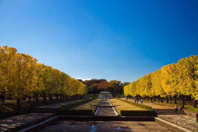 昭和記念公園 (18)