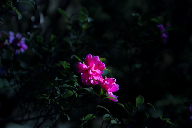 昭和記念公園 (24)