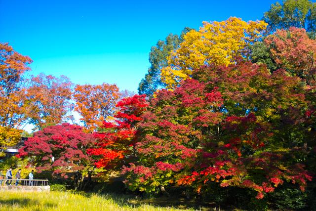 昭和記念公園 (25)