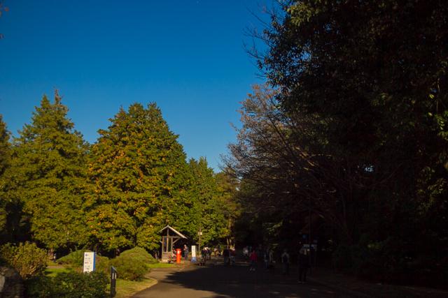 昭和記念公園 (29)