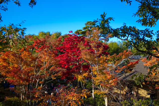 昭和記念公園 (32)