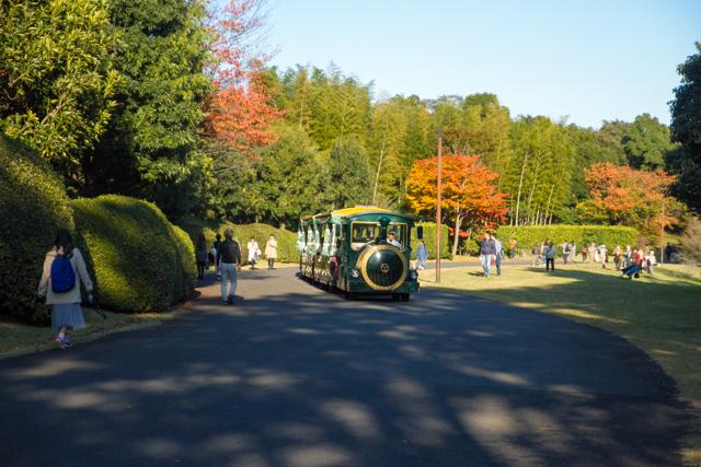 昭和記念公園 (37)