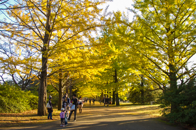 昭和記念公園 (39)