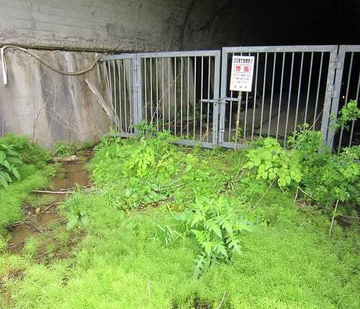 kyusakuramatitunnel07.jpg
