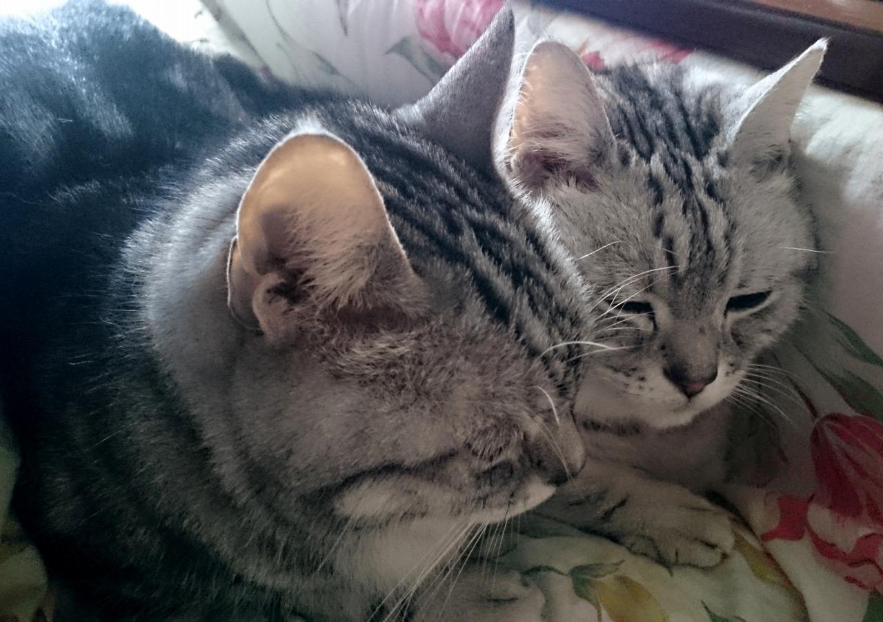 20161029-Kotatsu_Cat-X03.jpg