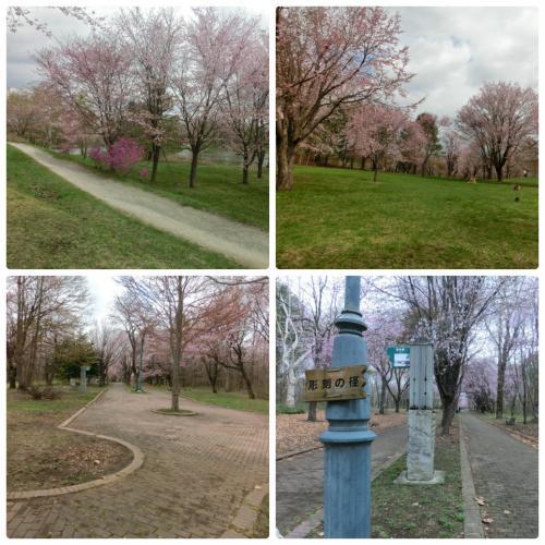 collage_photocat2_convert_20160519134855.jpg