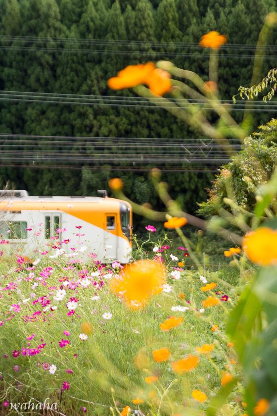 300923kintetsu-9.jpg