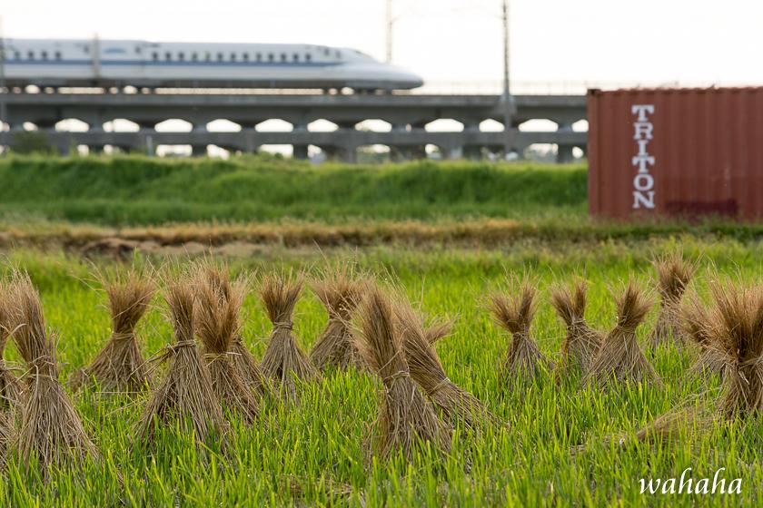 300925kanagasaki-1.jpg