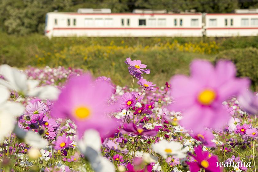 301028sintetsu_onoichiba-2b.jpg